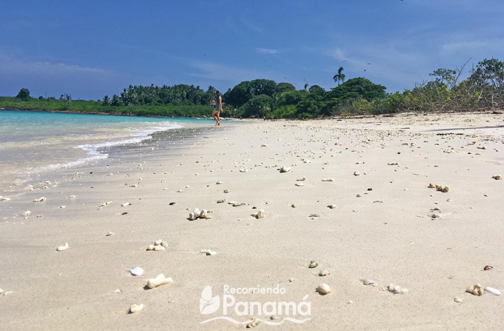 Corales en la arena.