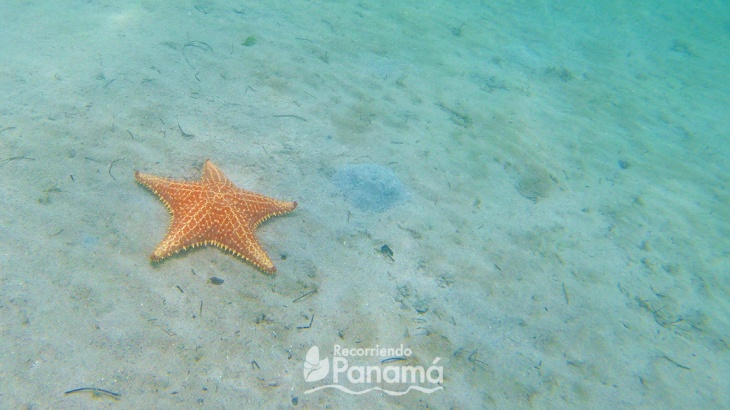 Playa de las Estrellas