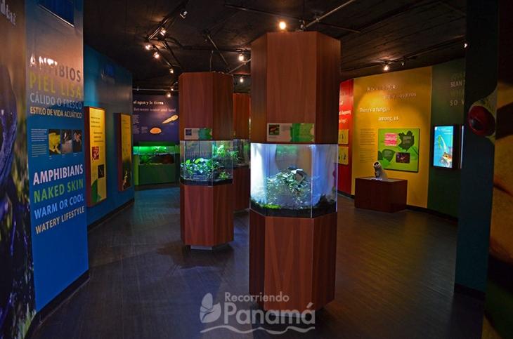 Exhibición de Ranas