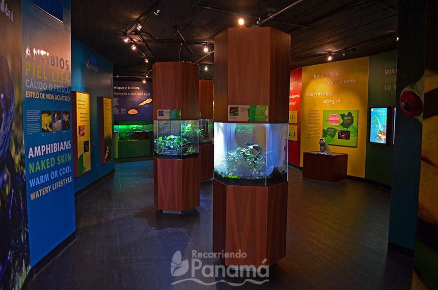 Exhibición de Ranas.