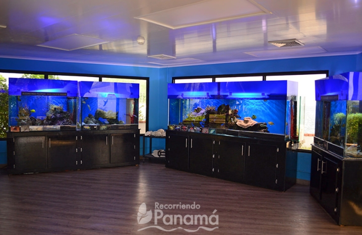 exposición de peces tropicales