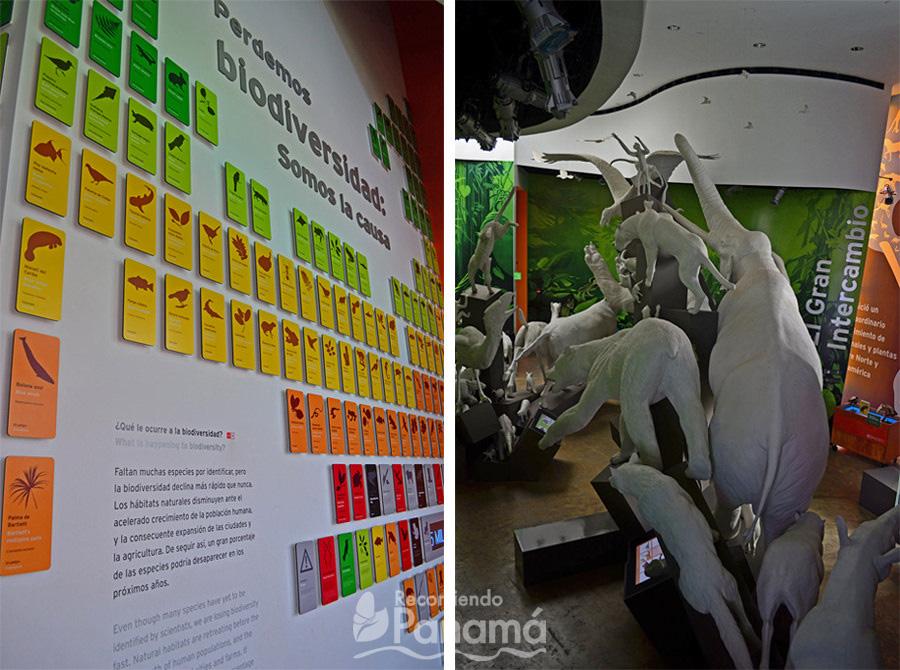 Mural de sala Perdemos biodiversidad y sala El gran Intercambio