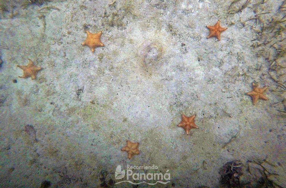 Estrellas de mar.