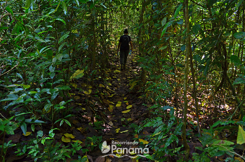 Uno de los senderos cubierto por las hojas de los árboles.