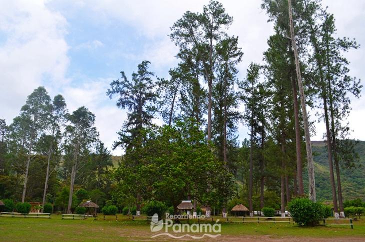 2da área de camping de ANAM
