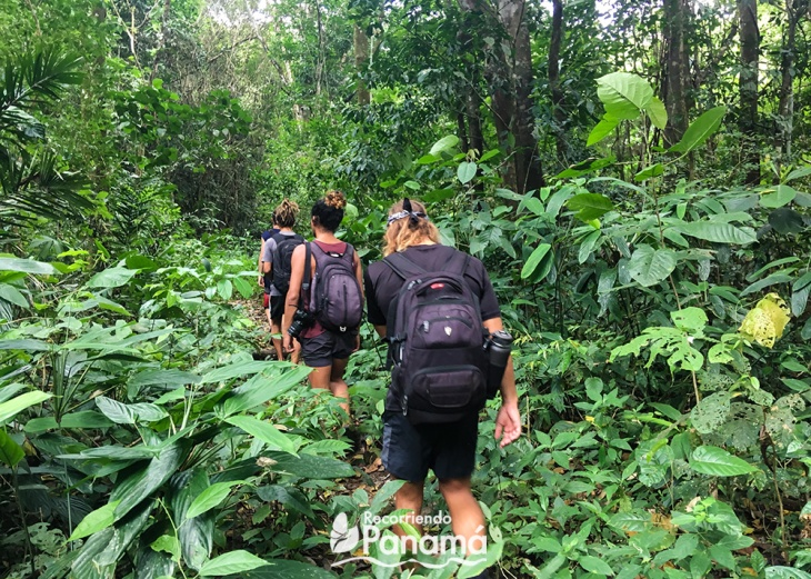 caminado-en-la-selva