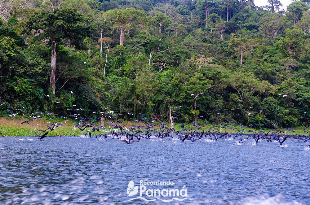 Aves sobre el río.