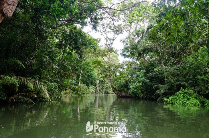 safari-por-el-canal-de-panama