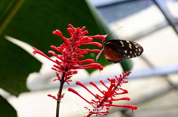 mariposa-con-la-flor