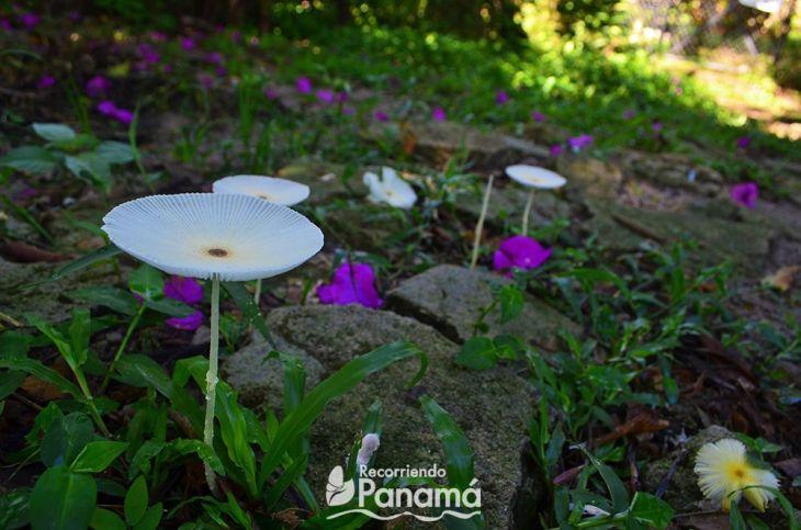 hongos en el camino