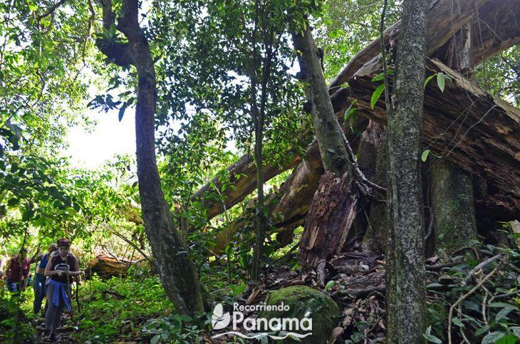 cerro-trinidad-arbol