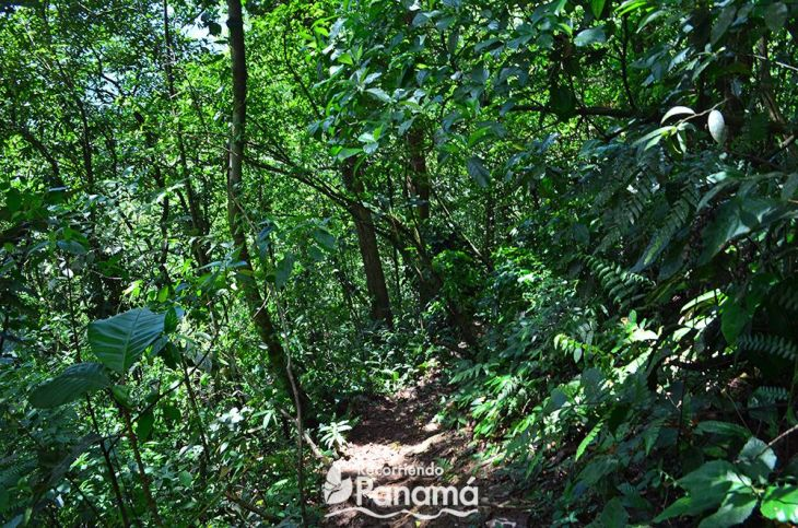 cerro-trinidad-sendero