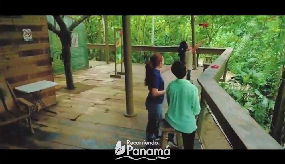 Panama Rainforest Discovery