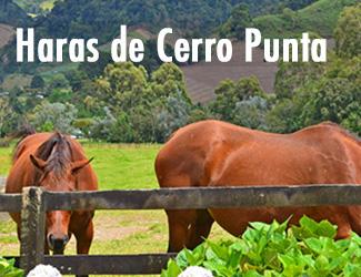 Haras de Cerro Punta