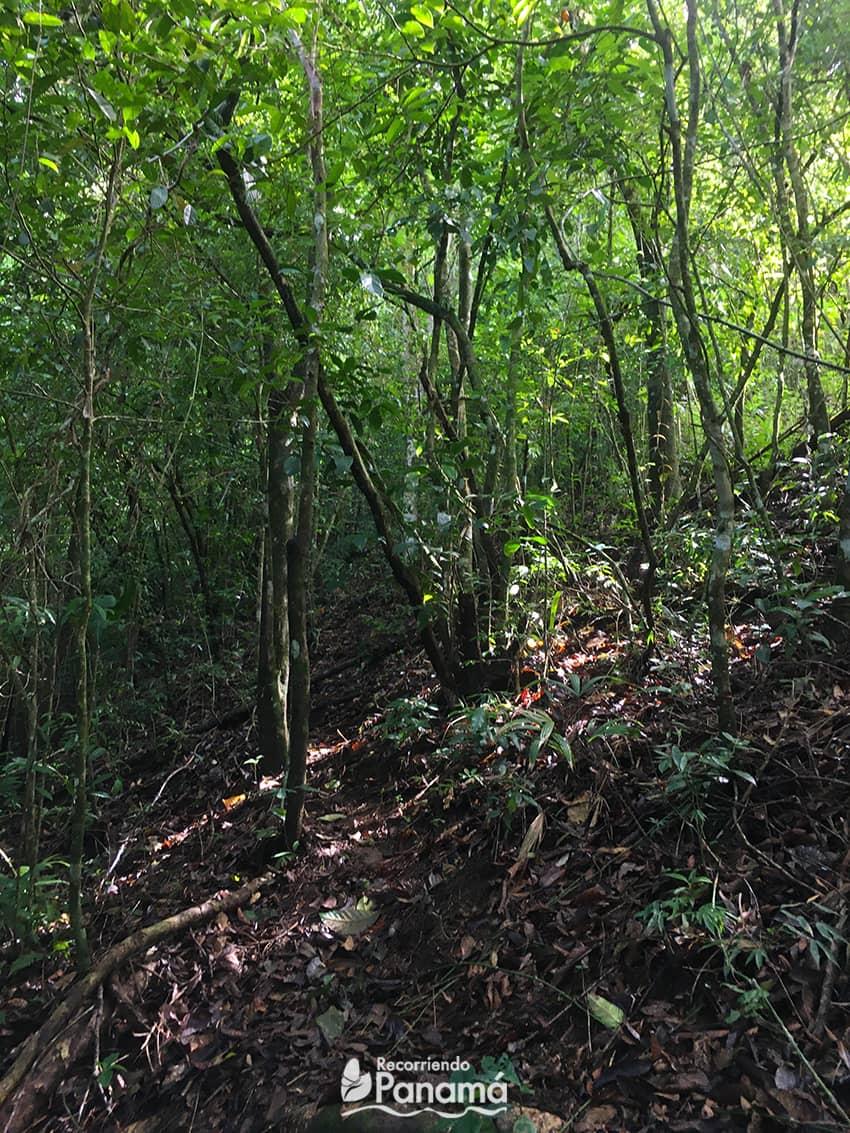 Sendero del Cerro Turega.